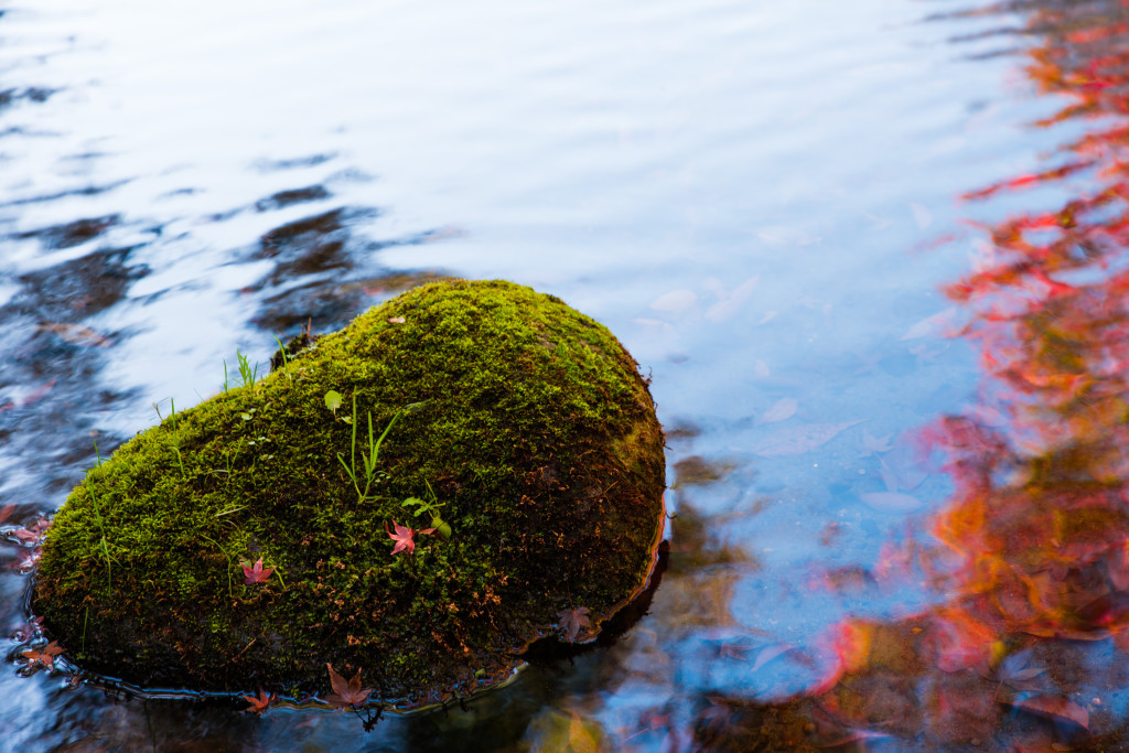 calm moss and water